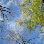 Bäume Himmel mit Grün